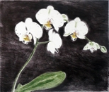 Phalaenopsis antarctica