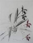 Orchidaceae - Paphiopedilum insigne