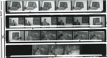 Contact Sheet: George Todd Exhibition (1989)