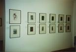 Photograph: Twelve Works on Display at Bosnian Harvest Exhibition (1994)