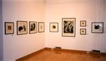 Photograph: Various prints by Elizabeth Blackadder in Glasgow Print Studio Gallery (1998)