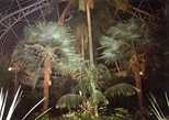 Photograph: Trees in the Glass House at the Winter Gardens