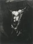 Rembrandt's Carcass