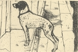 Venice Dog
