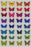 32 Butterflies