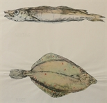 Untitled (Whiting & Plaice)